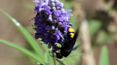Large wasp Stock Footage