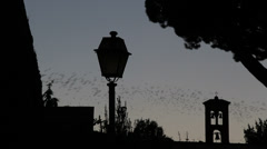 Thousands of starlings fly 42 Stock Footage