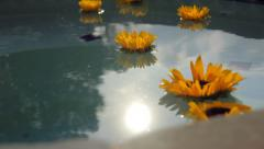 Sunflowers In Hot Tub Stock Footage