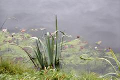 waterside scenery - stock photo
