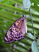 Swallowtail Stock Photos