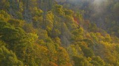 Stock Video Footage of Tilting-up from Autumn Foliage through the Mist to a Land in the Sky