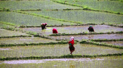 Rice fields, Pokhara, Nepal Stock Footage