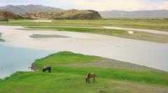 Horses grazing at Ulaanbaatar Suburbs Stock Footage