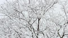 Snowy Tree Wide Shot Stock Footage