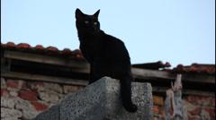 Black cat Stock Footage