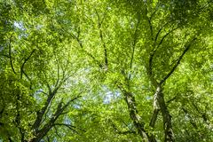 green canopy - stock photo