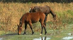 Bramble Sticks To Horses Mane Stock Footage
