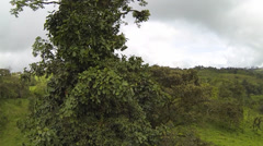 Tracking down a solitary rainforest tree in western Ecuador Stock Footage