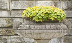 Stone bowl with flowers on the background wall Stock Photos