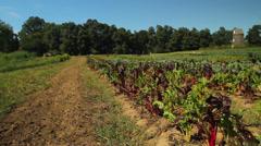 Harvesting season (2 of 4) Stock Footage