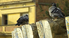 Stock Video Footage of Spain Catalonia Barcelona Park Parc Guell pigeons