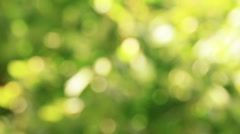 Natural Bokeh 1 Stock Footage