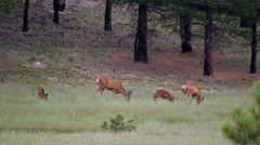 Deer at treeline Stock Footage