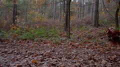 kids throwing leaves - stock footage