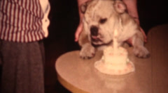 Vintage home movies, dog birthday Stock Footage