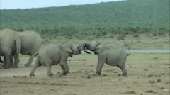 Two young elephants playing Stock Footage