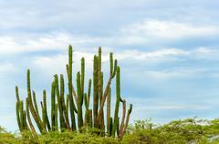 Cactus and sky Stock Photos