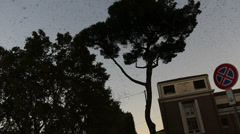 Thousands of starlings over Rome 82 Stock Footage