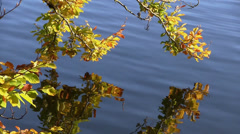 Autumn leaves reflected in water Stock Footage