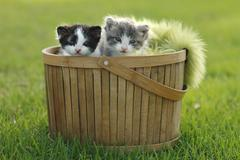 Two kittens in basket outdoors Stock Photos