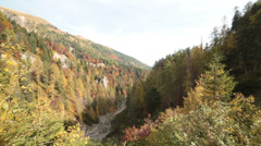 Windy pine tree forest in autumn | Italian alps | Static Shot Stock Footage