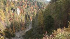 Windy pine tree forest in autumn | Italian alps | Tilt Shot Stock Footage