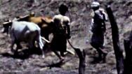 Stock Video Footage of Aden boys plowing field behind cattle vintage film HD D002