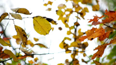 Leafs in autumn wind Stock Footage
