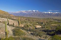 Stock Photo of Los Cardones national park