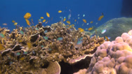 Stock Video Footage of Beautiful tropical reef, clip 2 of 3