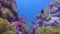 Amazing soft coral reef Stock Footage