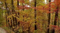Fall Trees SLOW PAN Right Stock Footage