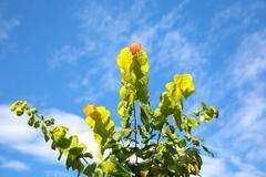 autumn caress - stock photo