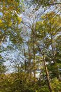 Sky through the trees Stock Photos