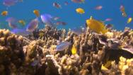 Stock Video Footage of Beautiful tropical reef, clip 1 of 3