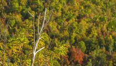 Focus-pull between Autumn Foliage and Dead Tree Branch Stock Footage
