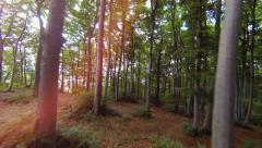 trees in forest. woods nature. sun flare. lens flare. forest. green fauna flora - stock footage