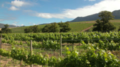 Vineyards Stock Footage