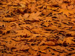 background of fallen autumn leaves - stock photo