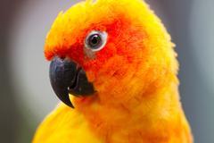 Color of sun conure parrot bird Stock Photos