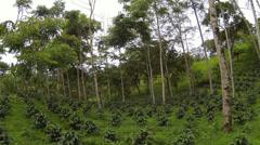 Flying through a shade-grown organic coffee plantation Stock Footage