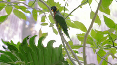 Parrot Stock Footage