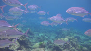 Stock Video Footage of Big school of fish, shot 2 of 3