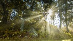 Sun Rays Passing Through Trees with Fog in the Smoky Mountains Stock Footage