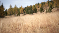 Yellow grass field in autumn | Italian Alps | Dolly in shot Stock Footage