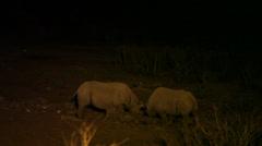 Black rhinoceros at night Stock Footage
