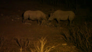 Stock Video Footage of Black rhinoceros at night