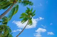 Stock Photo of Palms on blue sky background
