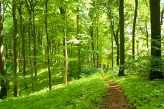 Forest footpath - stock photo